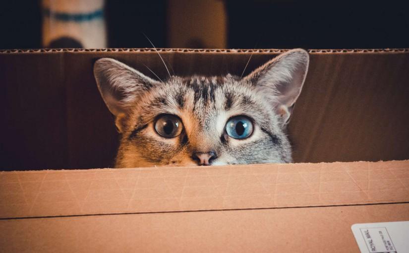 Quelques conseils pour déménager avec votre chat !